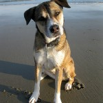 Annabelle, a happy client of Coastal Pet Sitting!